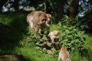 Tierpark Rheine Jahrgang 1